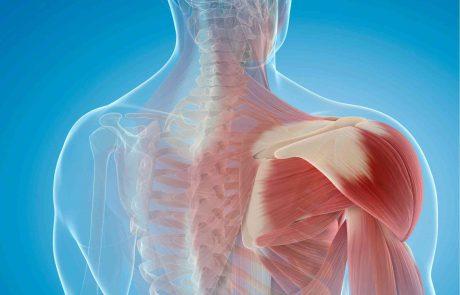 """חלבונים ורקמת השריר. סיכום הרצאה מכנס """"חלבון 360"""" מאת דיאטן יאיר להב."""