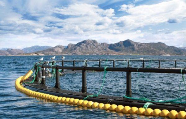 חקלאות דגים חיונית לנו ולכדור הארץ