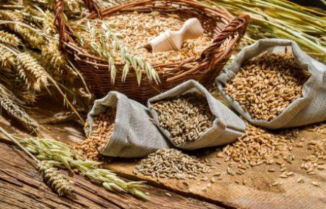 השלכות הדגן המלא על תחלואה במחלות קרדיווסקולריות וסוכרת